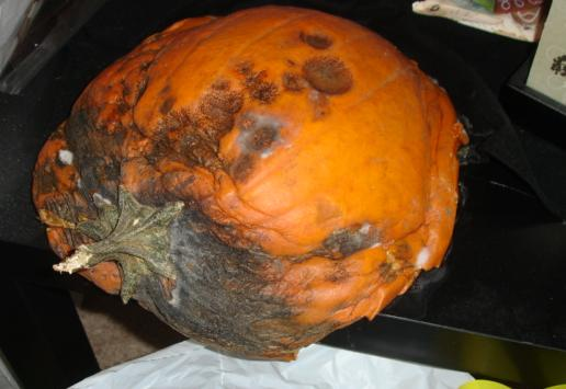 Pumpkin_mar2011